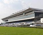 週末のお供に -データ解析- 京都競馬場 芝 1800m